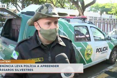 Denúncia leva polícia a apreender pássaros silvestres em Iguatemi