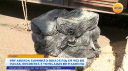 Polícia Rodoviária Federal aborda caminhão e em vez de vacas, encontra três toneladas de maconha