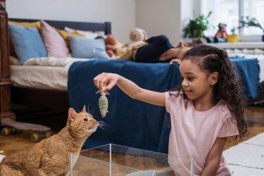 Aprenda a brincar com os gatos