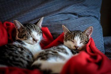 Número de gatos no Brasil cresce cerca de 3% ao ano