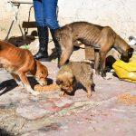 Após ameaçar protetores com pedaço de pau, suspeito de maus-tratos aos animais é preso e cachorros são resgatados
