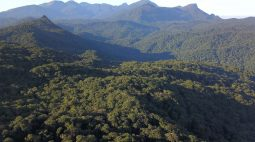 Força-tarefa identifica mais de 110 hectares de desmatamento ilegal no Litoral paranaense