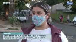 Cachorros de rua estão tocando o terror: perseguem moradores e mataram dois cães