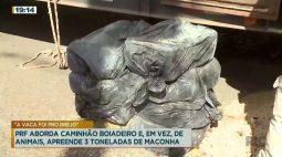PRF aborda caminhão boiadeiro e, em vez de animais, apreende 3 toneladas de maconha