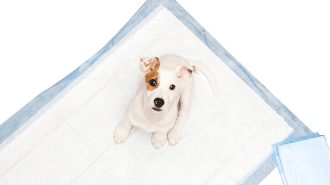 Tapete higiênico: conheça os benefícios desse produto