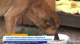 Voluntárias constroem casinhas e ajudam cachorros de rua com alimentos