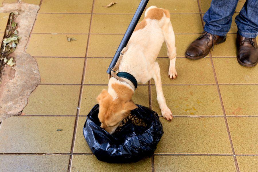 Cinco cachorros são resgatados por maus-tratos no Jardim Liberdade, em Maringá