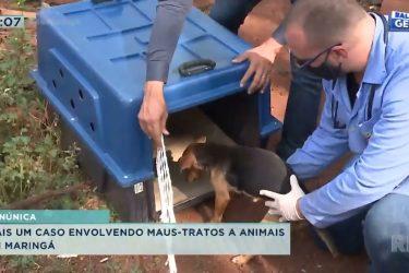 Mais um caso envolvendo maus-tratos a animais em Maringá