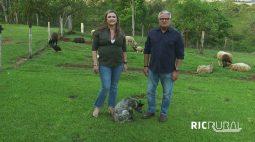 Confira os destaques do RIC Rural de domingo (26 de setembro)