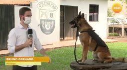 Cão farejador da polícia militar de Maringá encerra carreira