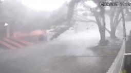 Câmera de segurança grava árvore caindo durante temporal no interior do Paraná