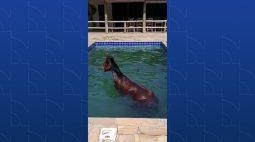 Inusitado: bombeiros são chamados para resgate e encontram cavalo na piscina; vídeo