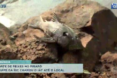 Morte de peixes no Pirapó, equipe da RIC chamou o IAT até o local