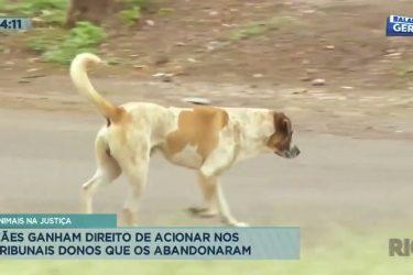 Cães ganham direitos de acionar nos tribunais donos que os abandonaram