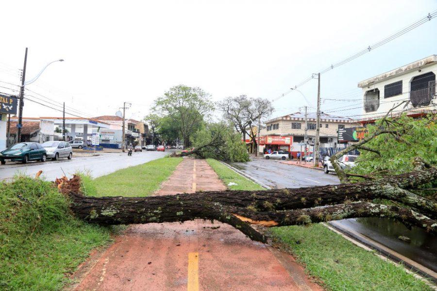 Vendaval deixa mais de 30 mil casas sem energia elétrica em Maringá; estragos foram registrados também em Londrina