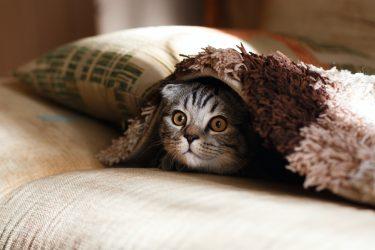 """Saiba como surgiu a expressão """"a curiosidade matou o gato"""""""