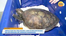 Lixo é encontrado em estômago de animais marinhos