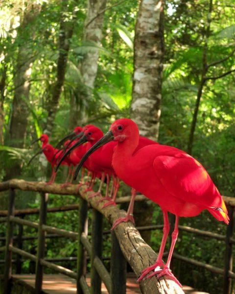 Parque das Aves vai receber o visitante 10 milhões nesta terça-feira (28)