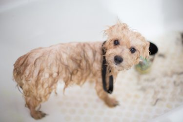 Pode dar banho em cachorro com sabão de coco?