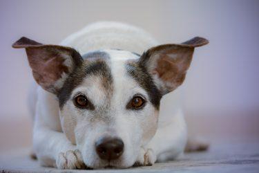 Alimentação rica em zinco auxilia na proteção contra dermatites e descamações na pele dos pets