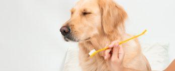 Como cuidar da saúde bucal dos cães?