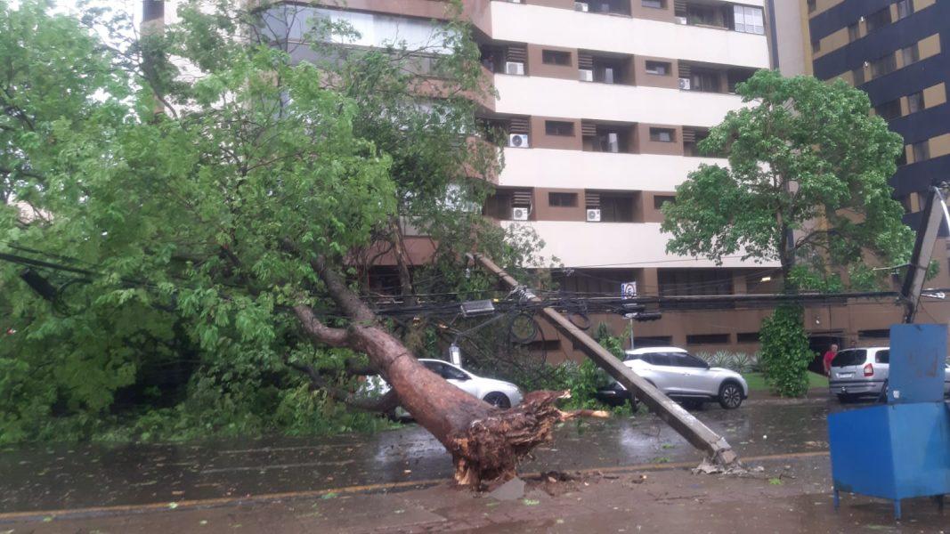 Depois de temporal, semáforos de Londrina ficam sem funcionar e diversas casas estão sem energia