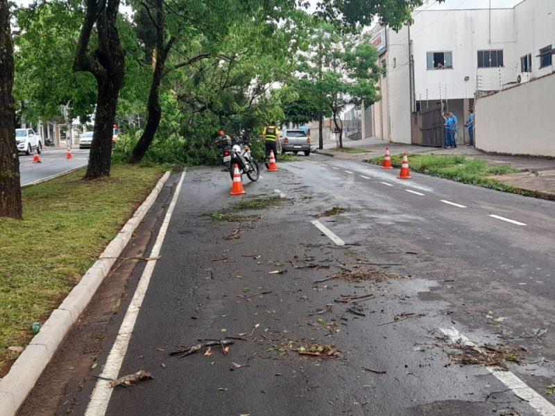 Temporal em Maringá deixa mais de 30 mil residências sem energia elétrica; vídeo