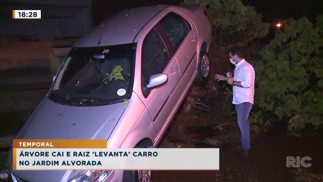 Árvore cai e raiz levanta carro no Jardim Alvorada