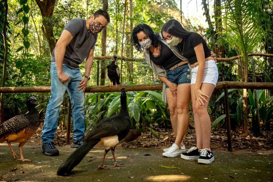 Parque das Aves recebe mais de 11 mil visitantes no feriadão de Independência