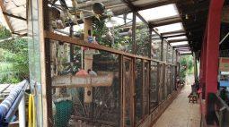 Polícia encontra 58 aves silvestres em cativeiro e homem é multado em R$ 29 mil