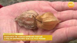 Pássaros de várias espécies visitam casa de empresário que cultiva pomar