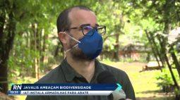 Javalis ameaçam biodiversidade: IAT instala armadilha para abate