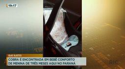 Cobra é encontrada em bebê conforto de menina de três meses