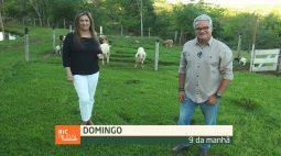 Confira os destaques do RIC Rural de domingo (24 de outubro)