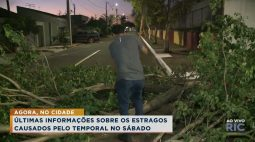 Morador resolve queda de árvores com as próprias mãos