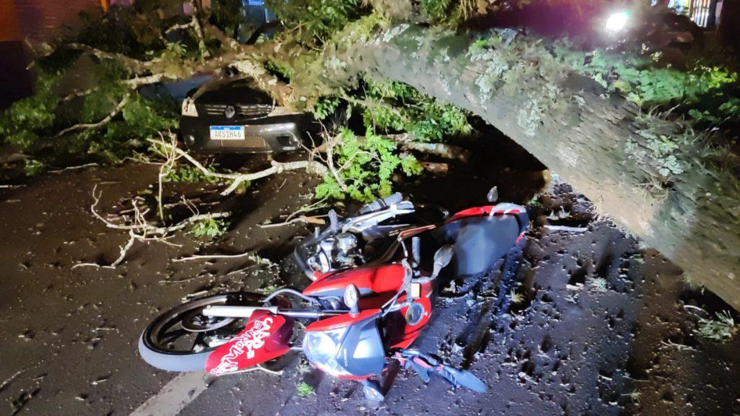 Árvore cai em cima de carro e moto em Sarandi e fere motociclista