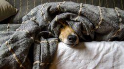 Cães e gatos podem ter vírus da Covid-19, mas não transmitem a doença, aponta pesquisa da PUC-PR