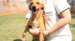 Projeto leva cachorros de abrigos para escolas públicas de Londrina