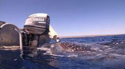 Tubarão se aproxima de barco com um labrador e ganha um 'beijo' do cãozinho; vídeo