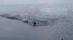 Vídeo: homem é perseguido por jacaré durante nado