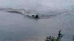 Vídeo: homem quase vira comida de jacaré em lago brasileiro