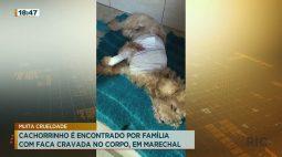 Cachorrinho é encontrado por família com faca cravada no corpo