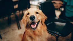 7 restaurantes pet friendly para conhecer em Curitiba
