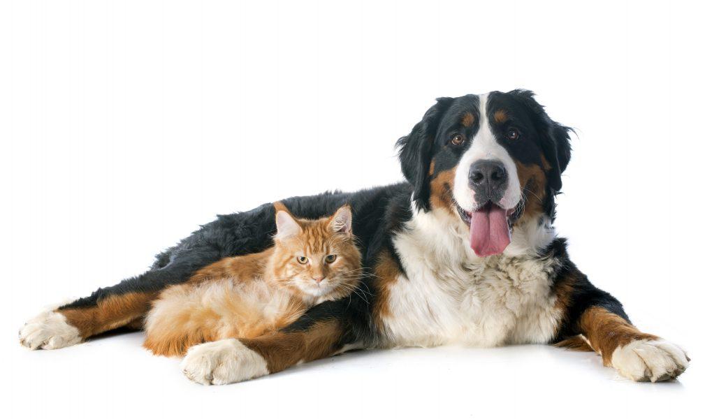 Como anda a saúde mental do seu pet?