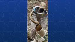 VÍDEO: Cobra cascavel aparece em residência e dá trabalho aos bombeiros em Maringá