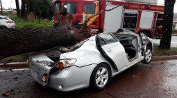 Árvore atinge carro e deixa dois homens feridos em Maringá