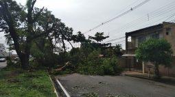 Ventos de quase 100km/h e fortes chuvas causam estragos pelo Paraná; veja imagens
