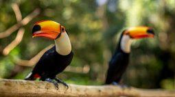 Parque das Aves espera receber 8 mil visitantes durante o feriadão de Finados
