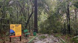 Temporal com granizo e ventos de quase 100 km/h atinge Cascavel e região; zoo ficará fechado