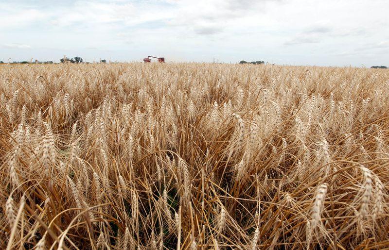 Preços de exportação de trigo da Rússia recuam